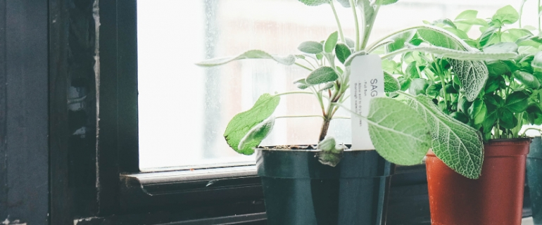 A photo of a window sill with potted plants.